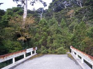 屋久島のの生命力はすごいなあと思う。