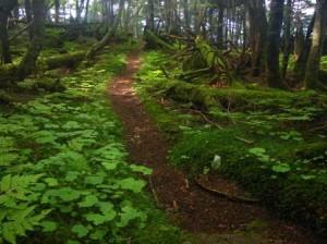 森の道(上松Aコース)