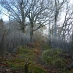 森に続く霧立古道