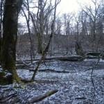 夜明けの山池湿原