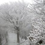 樹氷の尾根道