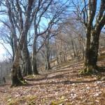 赤城尾山の尾根道