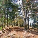 駒背山への森の道