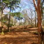 駒背山のゆるやかな台地を歩く