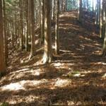 植林の中の駒背越