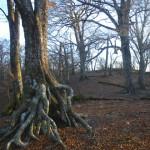 テント地の森