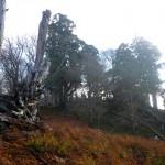 大杉の尾根をゆく