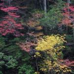 南川の紅葉