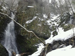 ワサビ大滝