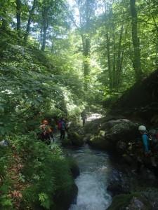 美しい原生林を歩く