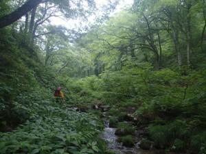 雨でしっとりとした原生林